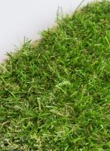 [Travní koberec FUNgrass Bristol]